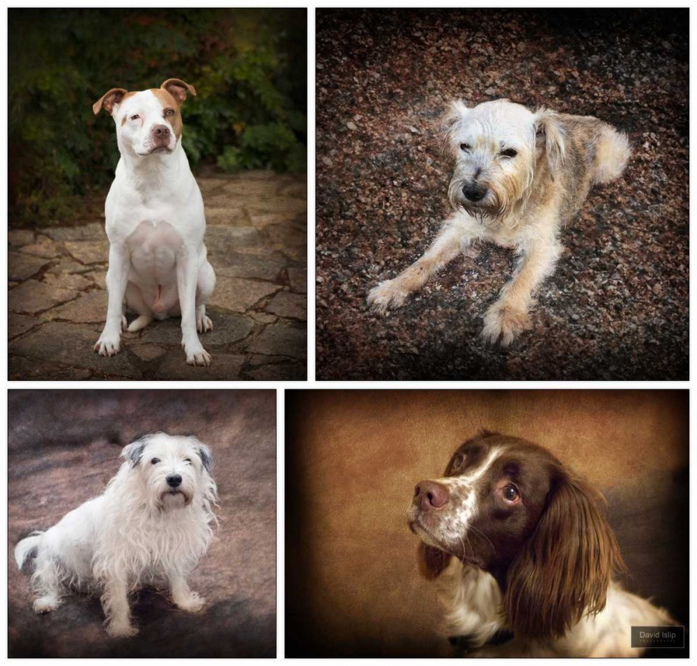 pet portraits home