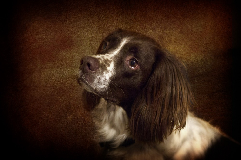essex dog portraits